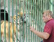 Roberto coccola la sua tigre (foto Cavicchi)