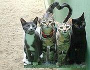 Nel gattile vivevano 11 gatti adulti e 4 cuccioli