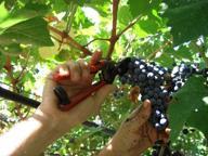 Il territorio, l'uva e il vino: una domenica sul Montenetto