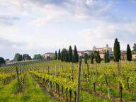 Gli agricoltori abbandonano il mais: a Brescia è boom di vitigni