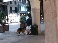 Se il cane porta il padrone a fare pipì in Corso Zanardelli