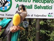 Brescia, aperta la stagione di caccia: già sorpresi tre bracconieri