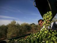Regione, 64 milioni di euro per investire nell'agricoltura bresciana
