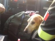 Resta bloccato quattro giorni in valle, cane recuperato dai Vigili del Fuoco