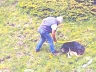 Uccisero cane a bastonate: animalisti in aula contro i pastori Romelli