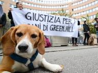 Green Hill in vendita, Marshall lascia l'Italia: «Leggi troppo restrittive»