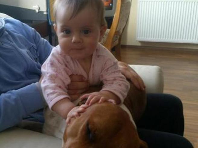 Sbranata dai pitbull a 1 anno, cani abbattuti Nonno  indagato|Video